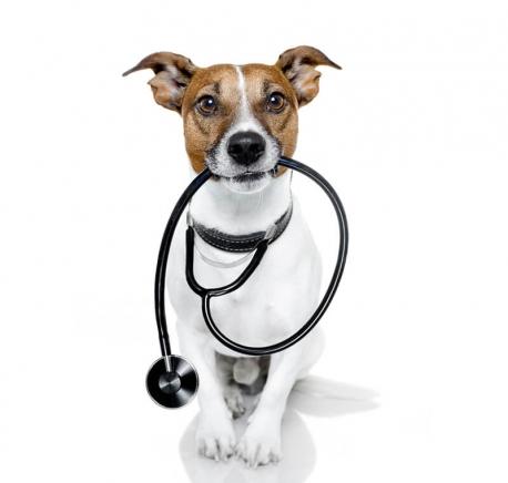 http://patinhasurbanas.com.br/wp-content/uploads/2017/10/veterinario-458x436.jpg